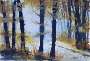 Forest 9